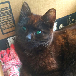 cat kitten blind rescue stray freetoedit