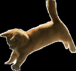 freetoedit cat aesthetic gold goldaesthetic