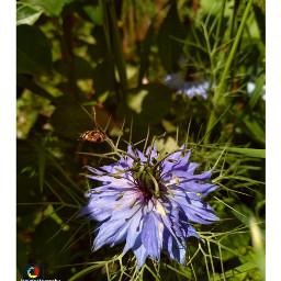 freetoedit followme follow4follow bee bees