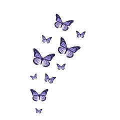 butterfly butterflies aesthetic pretty nature freetoedit