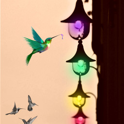 freetoedit gatheringrainbows rainbow hummingbird lights