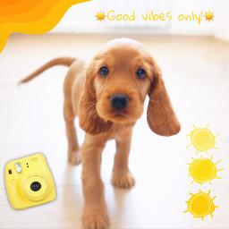 freetoedit yellow yellowaesthetic puppy cute
