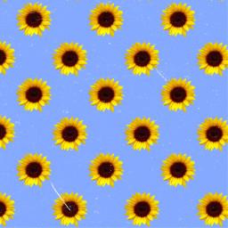 freetoedit aesthetic aestheticbackground background sunflower