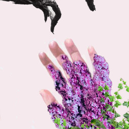 freetoedit growth lilac irclilacinmyhand lilacinmyhand