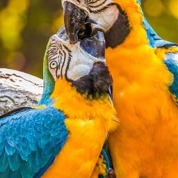 parrot parrots love realphoto tattooday freetoedit