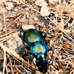 black green insect freetoedit