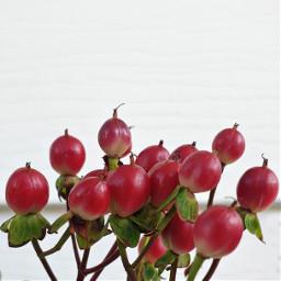 plantsandflowers nature minimalistic closeupshot adjusttool freetoedit
