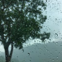 freetoedit photography rain drops trees