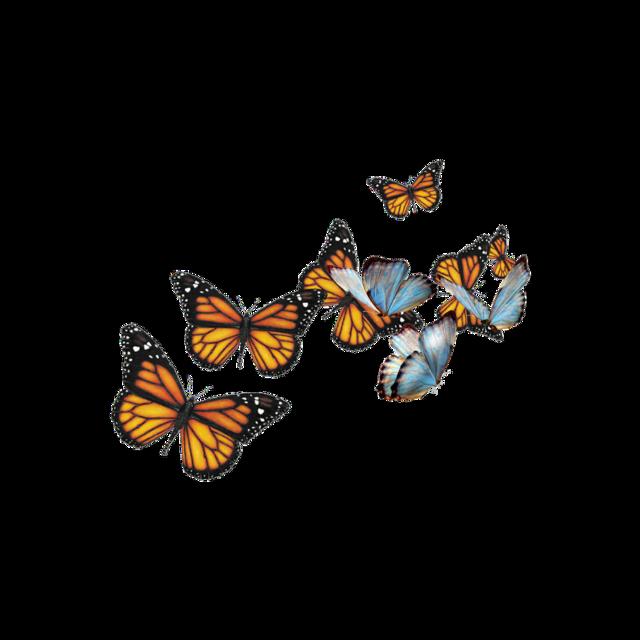 #butterfly #butterflies #blue #orange #nature #monarch #bluebutterflies #pretty #freetoedit