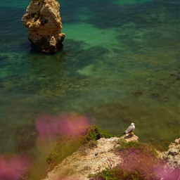 nature photography cliffwalk wildflowers foreground freetoedit