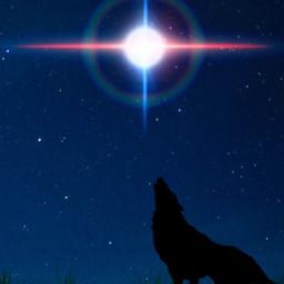 freetoedit fox lens silhouette grass