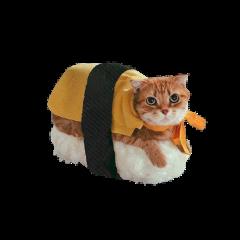 freetoedit cat кот котик рыжий