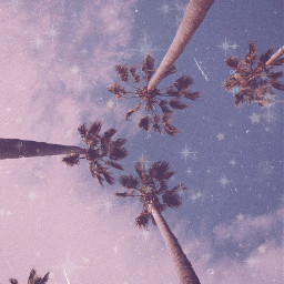 freetoedit background aesthetic palmtrees