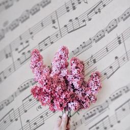 lilacs sheetmusic music aesthetic freetoedit irclilacinmyhand lilacinmyhand