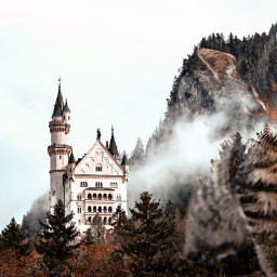 freetoedit castle germany cat citten