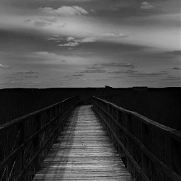freetoedit photography monochrome interesting footbridge