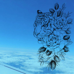 tiger sky wild plane bluesky