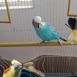 birbmemes bird birdmemes freetoedit