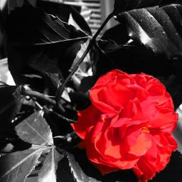 freetoedit colorpop flower