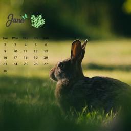freetoedit calendar calendar2020 june junecalendar srcjunecalendar #summertime