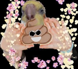 freetoedit birb birdmemes funny