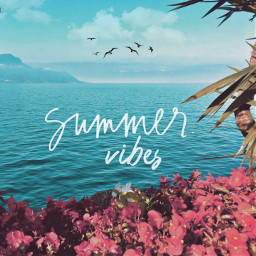 freetoedit background backgrounds summervibes summer