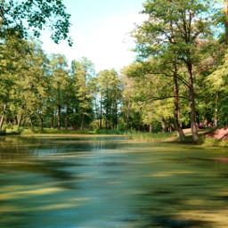 freetoedit nature photography park lake