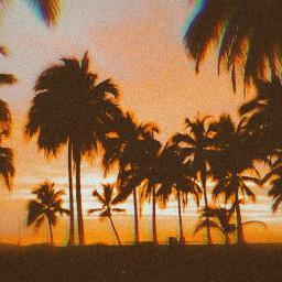 glitch palmtrees beachsunset orangeaesthetic freetoedit