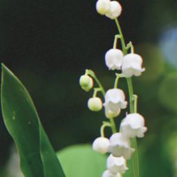 freetoedit wildflowers myphoto spring june