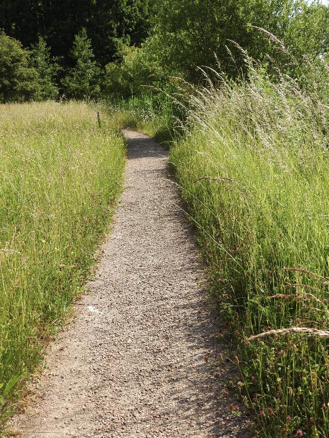 #freetoedit #myphoto #pathway #park #grass #naturphotography @piroskab