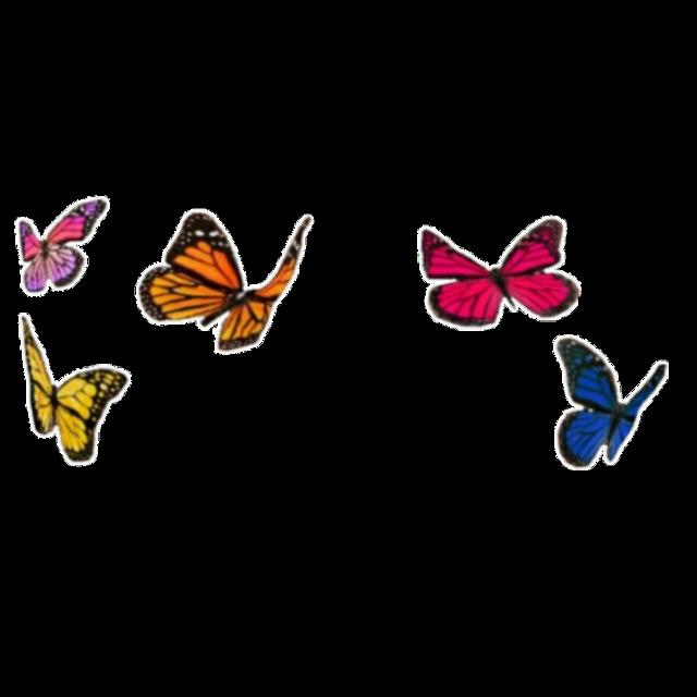 #freetoedit #butterflies #butterfly #butterflys #butterflybackground #rainbow #aesthetic #butterflyaesthetic #rainbowaesthetic #butterflycrown
