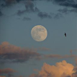 freetoedit moon clouds bird myview