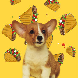 ecfastfoodemojibackgrounds fastfoodemojibackgrounds chihuahua tacotuesday tacos freetoedit
