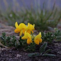 nature flower closeup lowangle outandabout freetoedit