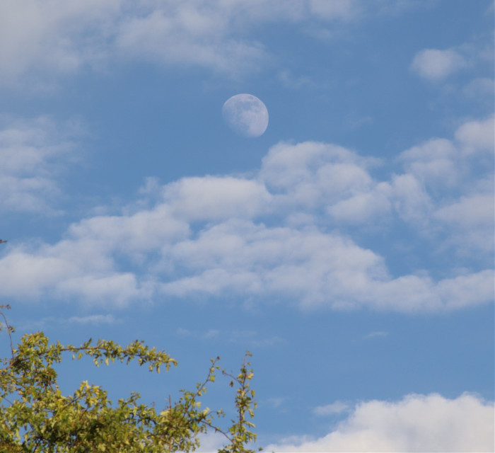 Took this the other day, just love seeing the moon in the daylight #moon #skyandclouds #trees #freetoedit