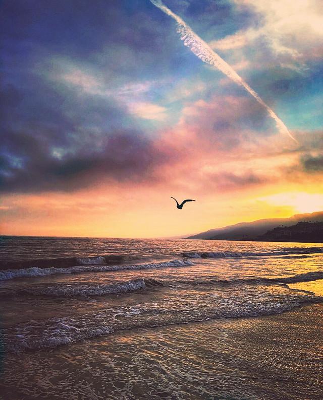 #nature #beachview #endoftheday #sunsettime #goldenhour #wavescrashing #seagullinflight  #silhouette #sunsetcolors #beautifullight #reflectiononwater #horizon #skyandclouds #beachvibes #beautifulscenery #natureshot #beachphotography                                                                                                                                                   #freetoedit