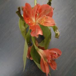 freetoedit flowers orangecolor original