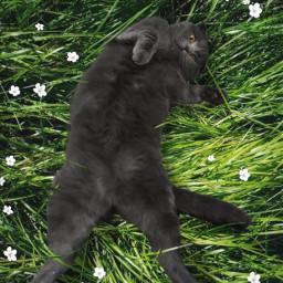 freetoedit cat grass ftestickers magicbrush