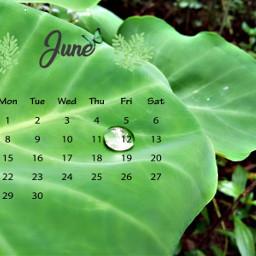 nature photography raindrops kerala natura freetoedit srcjunecalendar junecalendar #summertime