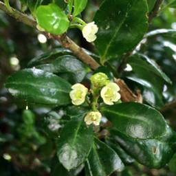 blooms bush macro photography closeup