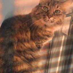 freetoedit cat rainbow window picsart rcgoldenhour goldenhour