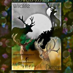 rowing man lakeview wildlife deers