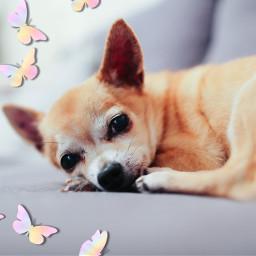 freetoedit butterflybrush