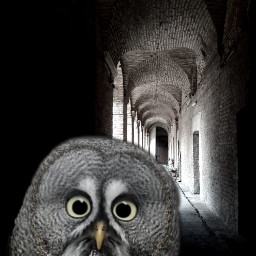 freetoedit surrealart surrealismstyle arches blackandwhitephotography