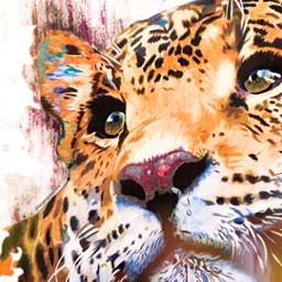 freetoedit animal tiger tigerface colors rcsplatterart splatterart