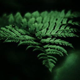 freetoedit photography naturephotography greenpower plants