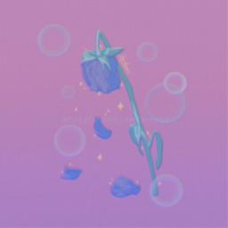 aesthetic rose wilted wiltedrose flower