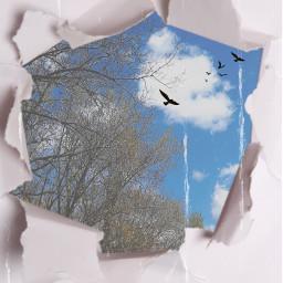 freetoedit birds riped paper outdoors rcrippedpaper rippedpaper