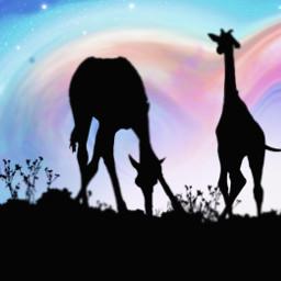 freetoedit colorful vipshoutout color giraffe