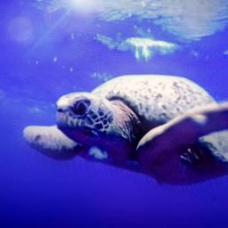 freetoedit wth oceanlife polanco refuge